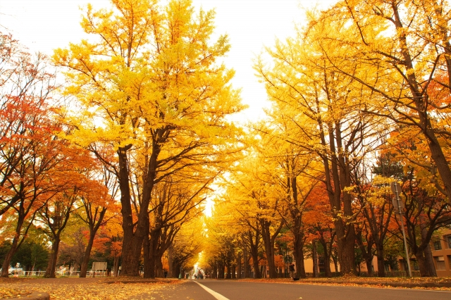 Why autumn is so special here in Norway and Japan?
